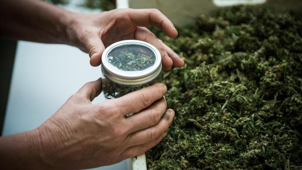 cannabis legale italia legislazione