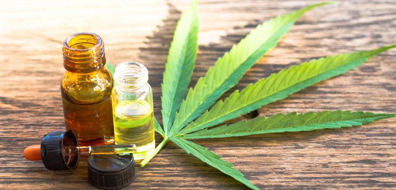 olio cbd cannabis